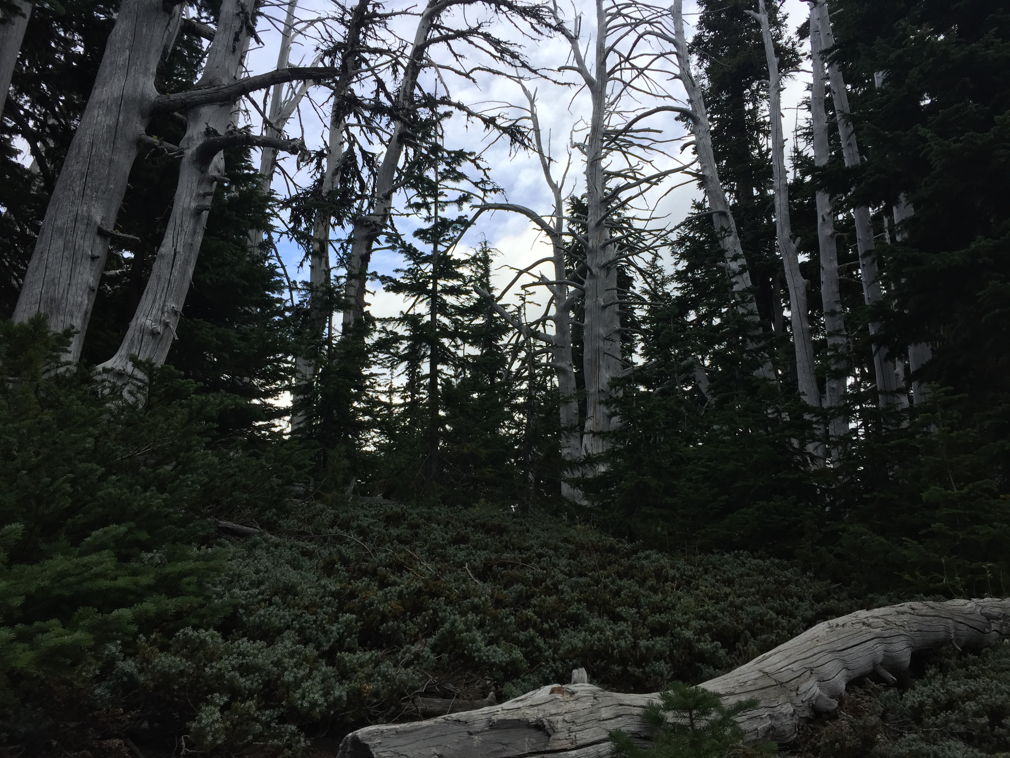 Nature at Mt. Hood Meadows