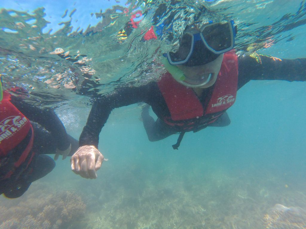 Snorkeling Peter Bay Whitsundays