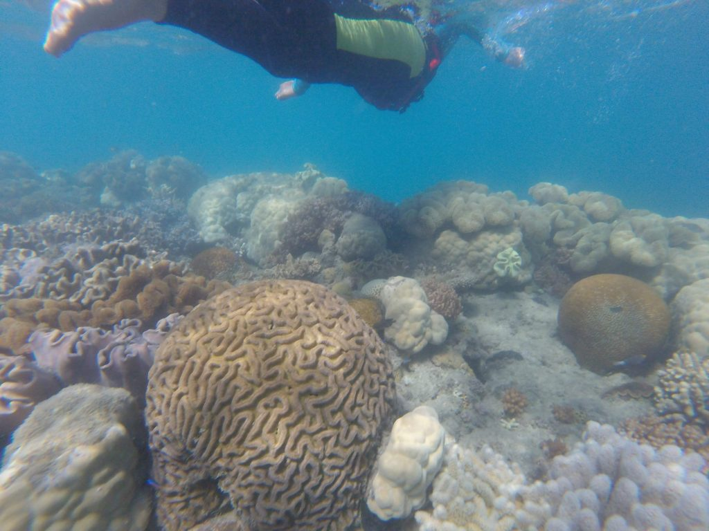 Whitsundays Snorkeling with Thundercat